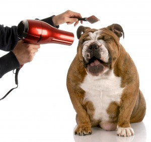Tips On Starting A Dog Grooming Business