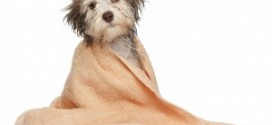 become a professional pet groomer